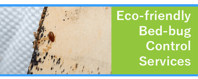 Eco-friendly Bed-bug Control Services