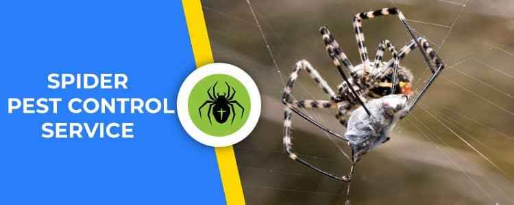 Spider Control Applecross